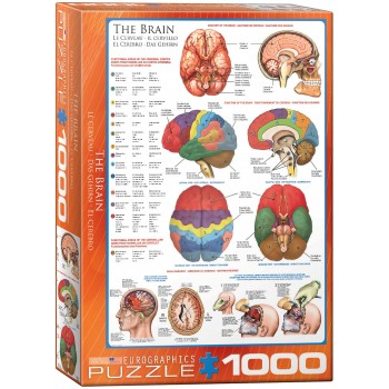 Eurographics Πάζλ 1000τεμ. 6000-0256 The Brain